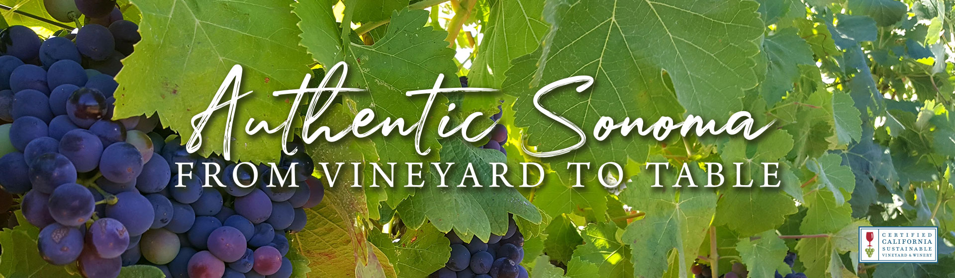 Authentic Sonoma from Vineyard to Table
